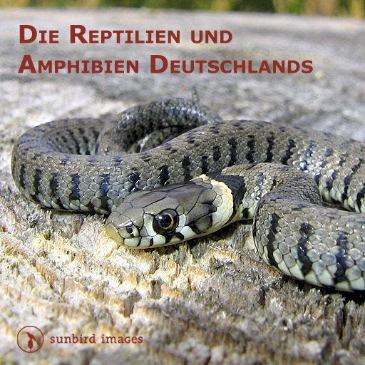 The Reptiles and Amphibians of Germany