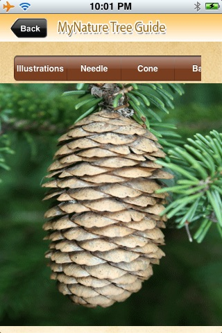 MyNature Tree Guide