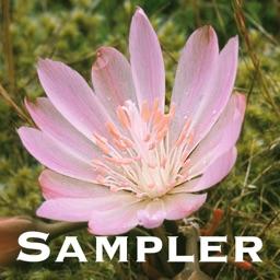Northwest Mountain Wildflowers Sampler