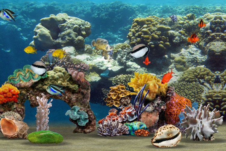MyReef 3D Aquarium screenshot-4