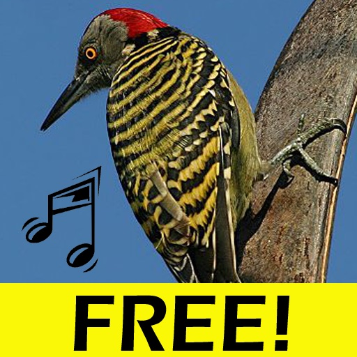 Free Bird Songs