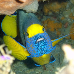 The Best Apps To Learn About Fish Marine Life