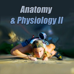 Anatomy & Physiology II