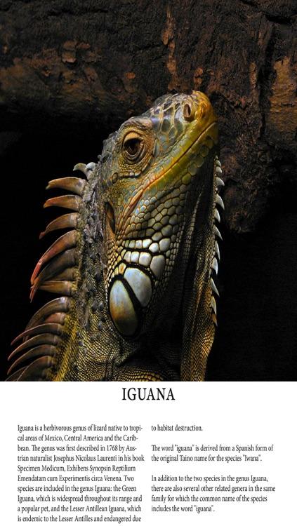 Reptile Magazine