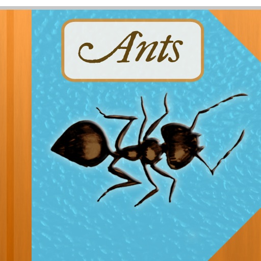 The Strange and Wonderful World of Ants Review