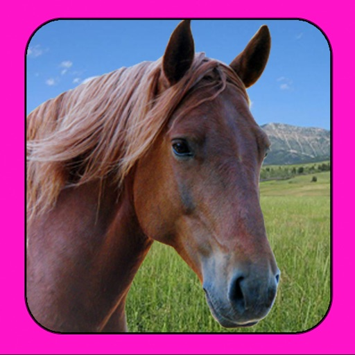 A Little Pet Horse HD icon