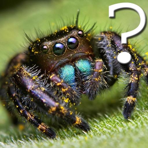 Spider Quiz for iPad