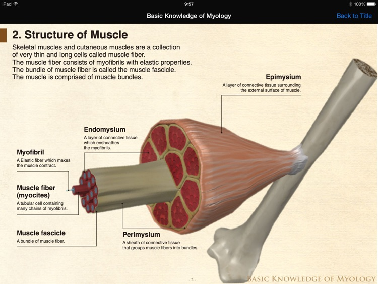 DS ANATOMY HEAD & NECK MUSCULOSKELETAL SYSTEM Lite screenshot-3