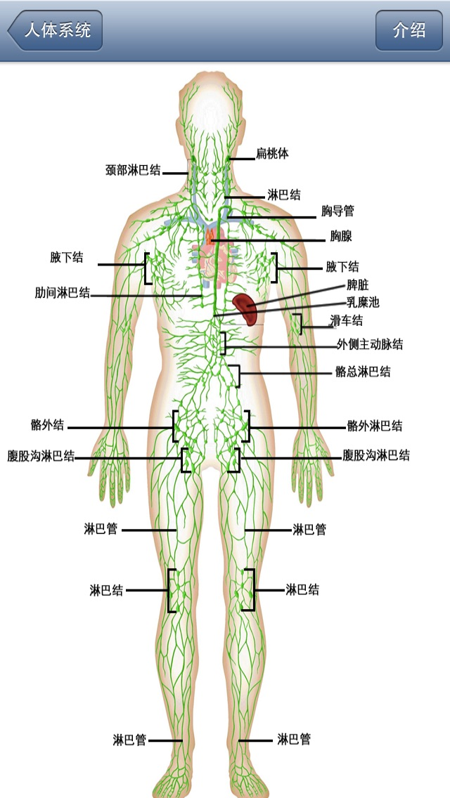 人体解剖/结构/系统[免费版] Screenshot