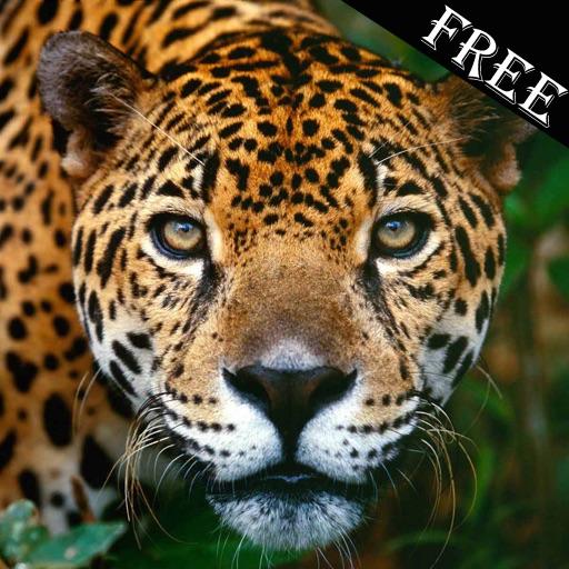 Animal Sounds Free iOS App