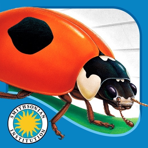 Ladybug at Orchard Avenue - Smithsonian's Backyard