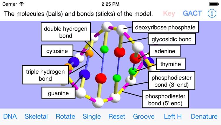 OnScreen DNA Model for iPhone screenshot-3