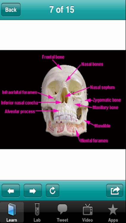The Musculoskeletal System screenshot-3