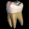 Perfect Tooth - eHuman Inc.