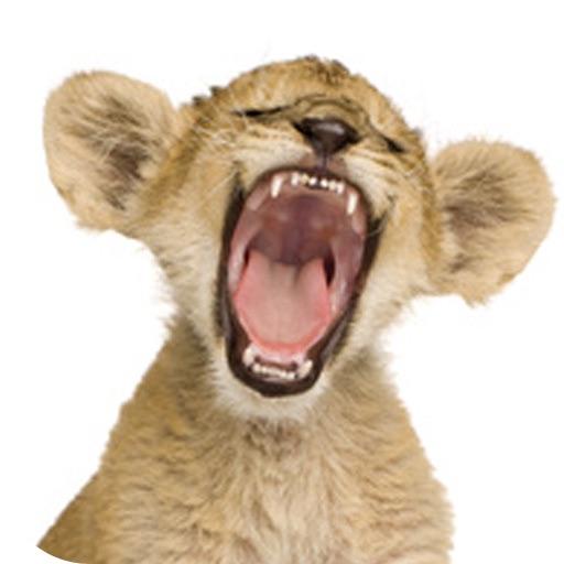funny animal jokes the zoo amp wild animal joke collection on the app