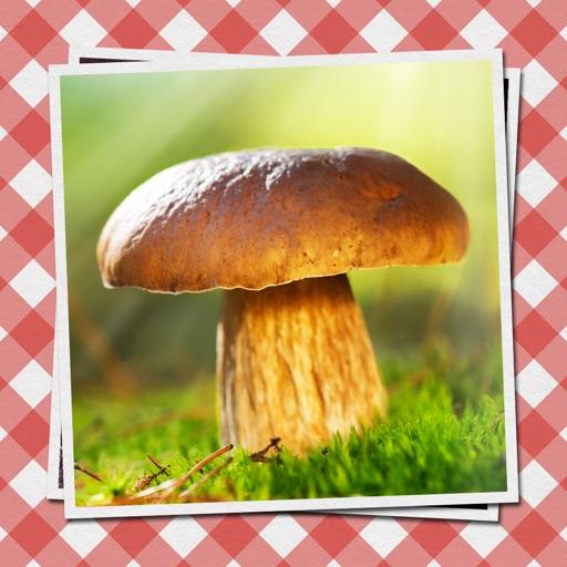 Dähncke's Pilze - sammeln, bestimmen und köstlich zubereiten