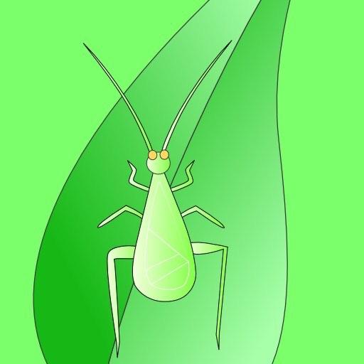 CricketSong