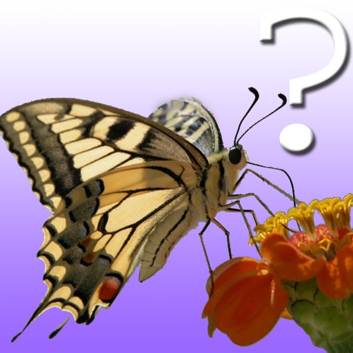 Butterfly Quiz for iPad