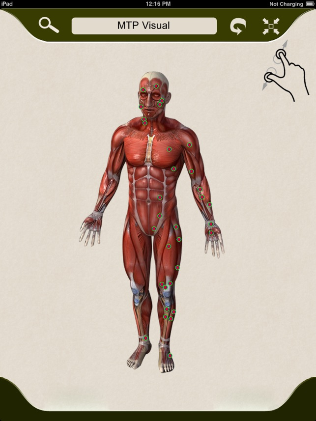 Muscle Trigger Points Visually Interactive On The App Store