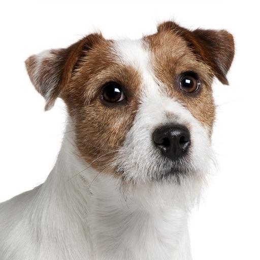 Befriending Dogs - Jack Russell terrier