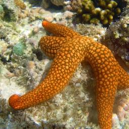 The Teaching Ocean Letters & Numbers