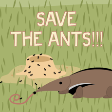 Activities of Save The Ants