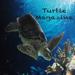 7.Turtle Magazine