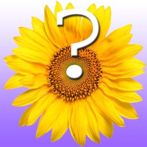 Flower Quiz for iPad