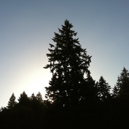 PDX Trees