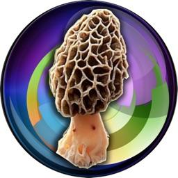 My Mushroom Log
