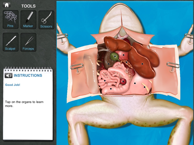 Frog Dissection screenshot-2