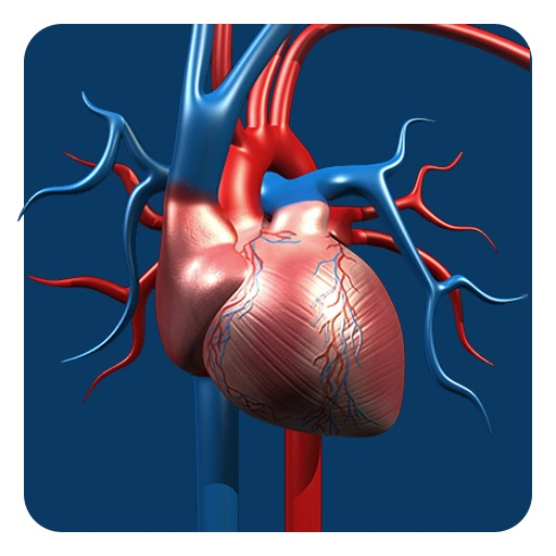 Artery System: CardioVascular