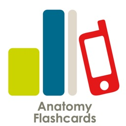 Anatomy Flashcard Review