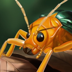 Megabugs Return!