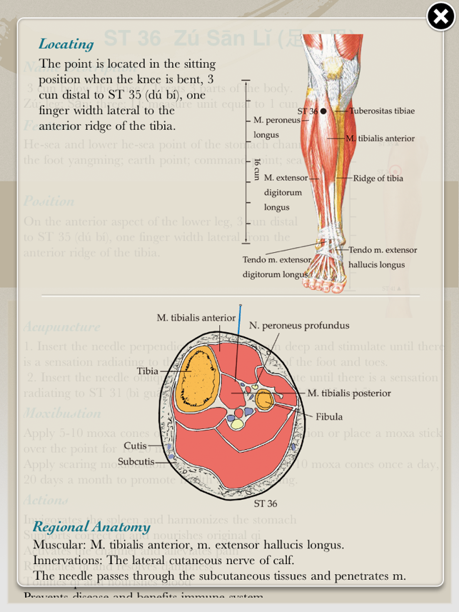 Anatomical Illustration of Acupuncture Points Lite 12+