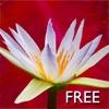 Yoga Virtuoso Free with Lyndon: Move, Stretch, Dance - iPhoneアプリ