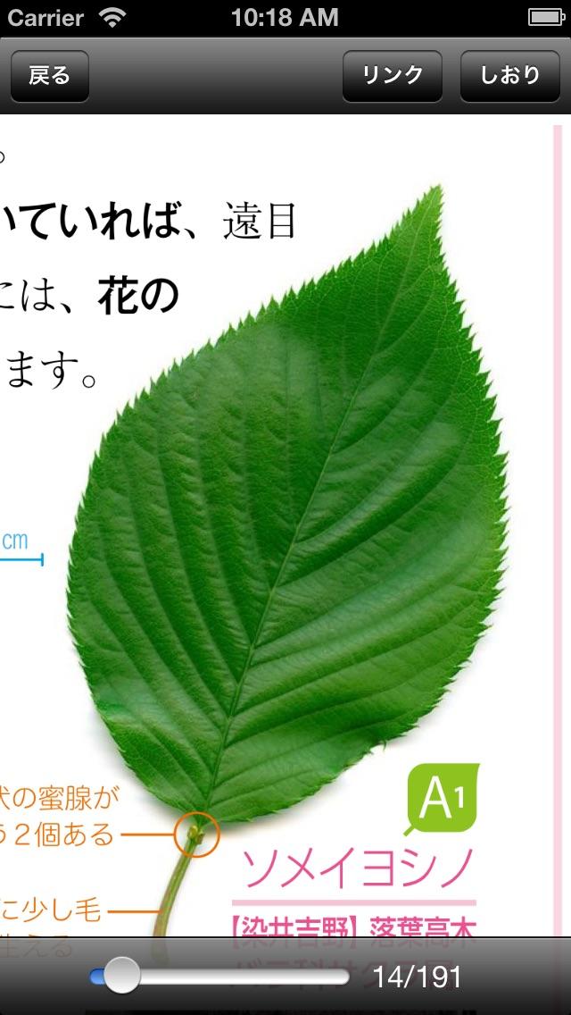 葉っぱで気になる木がわかる Q&Aで見分け... screenshot1