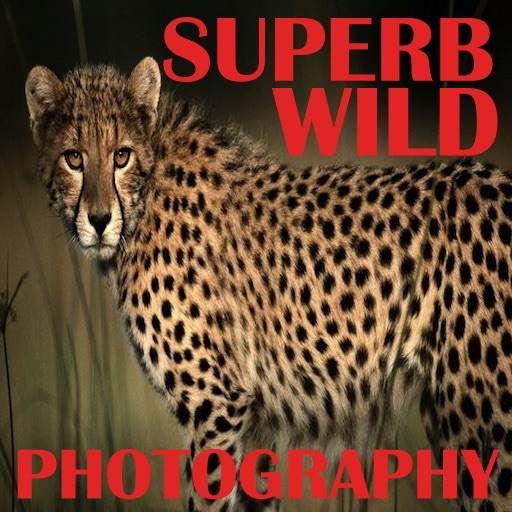Superb Wild Photography