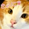 猫カフェきゃりこ~お客様の写真集~