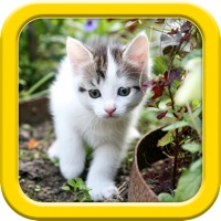 Codes for Cats puzzle - fun for kids Hack