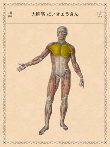 クラシック解剖学のおすすめ画像4