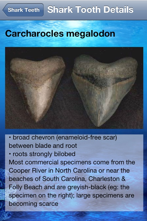 Shark Tooth Guide screenshot-3