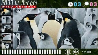 Hidden Image Animals review screenshots