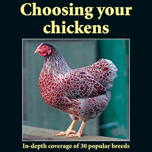 Practical Poultry - Choosing your chickens