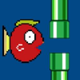 ko fish