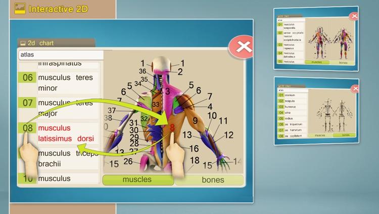Easy Anatomy 3D screenshot-4