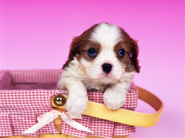 Cute Puppy Wallpaper screenshot-4