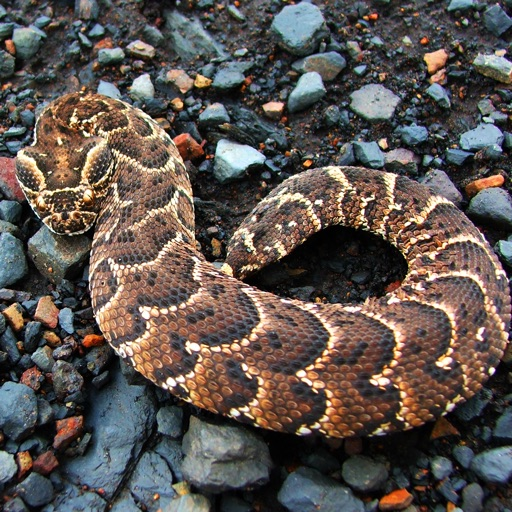 Poisonous Snakes: Deadly Reptiles
