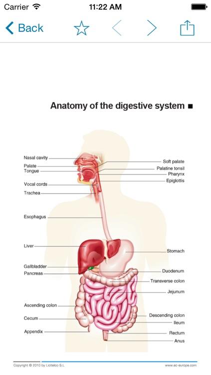 Miniatlas Gastroenterology