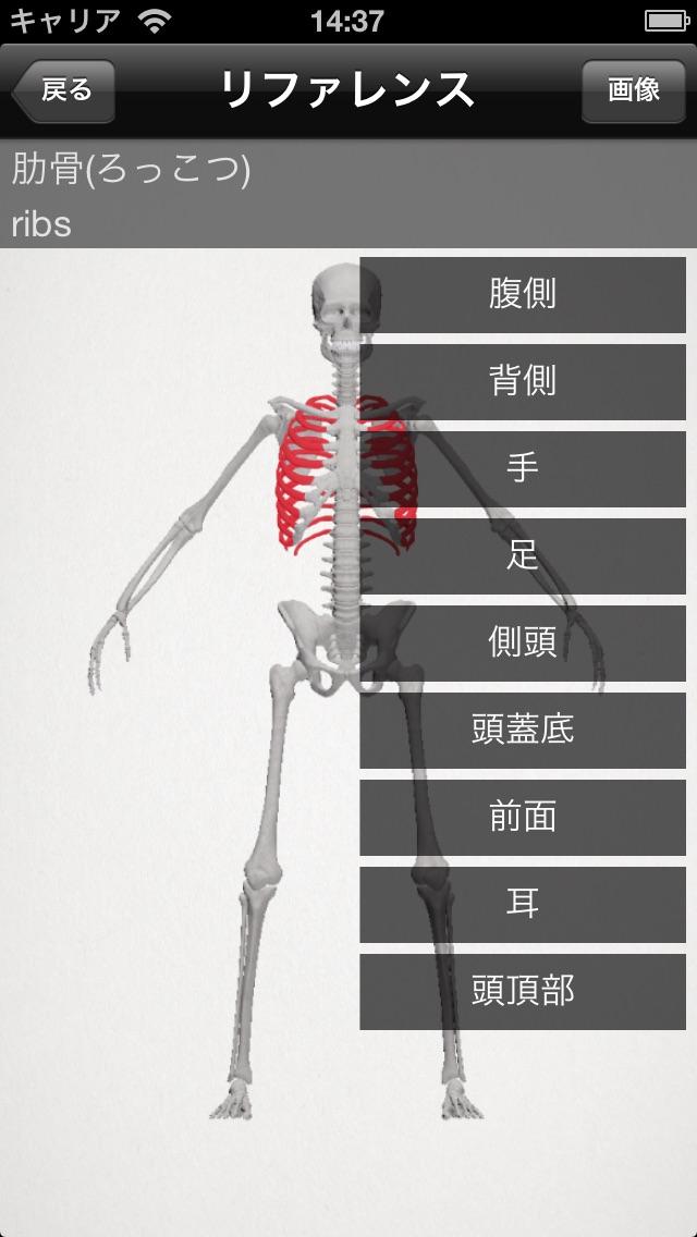 らくらく解剖学[骨] screenshot1